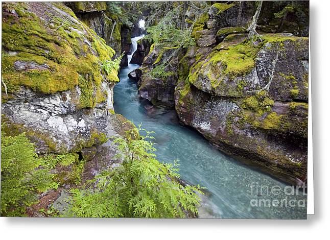 Avalanche Gorge In Glacier National Park Greeting Card