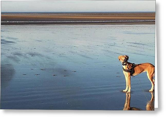 Ava's Last Walk On Brancaster Beach Greeting Card by John Edwards