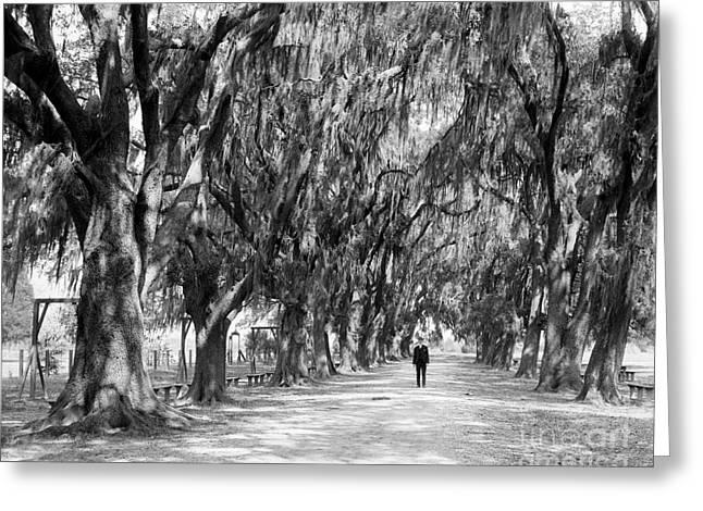Avenue Of Live Oaks, New Orleans Ca 1910  Greeting Card by Jon Neidert