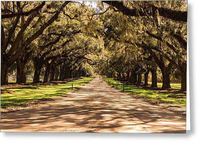 Avenue Of Oaks Boone Hall Plantation Greeting Card