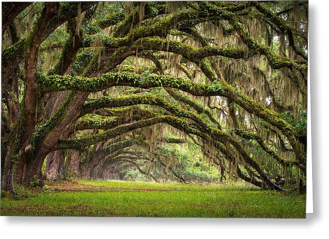 Avenue Of Oaks - Charleston Sc Plantation Live Oak Trees Forest Landscape Greeting Card