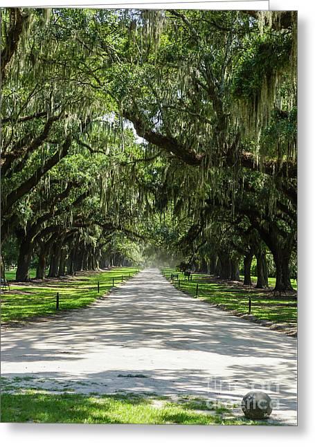 Avenue Of Oaks Greeting Card
