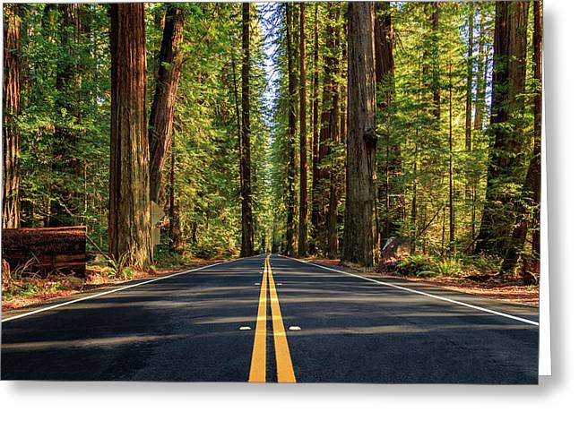 Greeting Card featuring the photograph Avenue Of The Giants by James Eddy