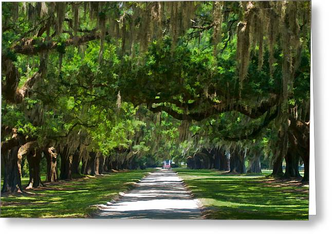 Avenue Of The Oaks At Boonville Plantation Greeting Card