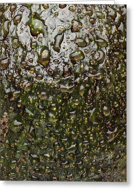 Avocado Skin Greeting Card by Steve Gadomski