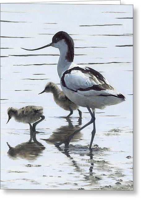 Avocet And Chicks Greeting Card by Clive Meredith