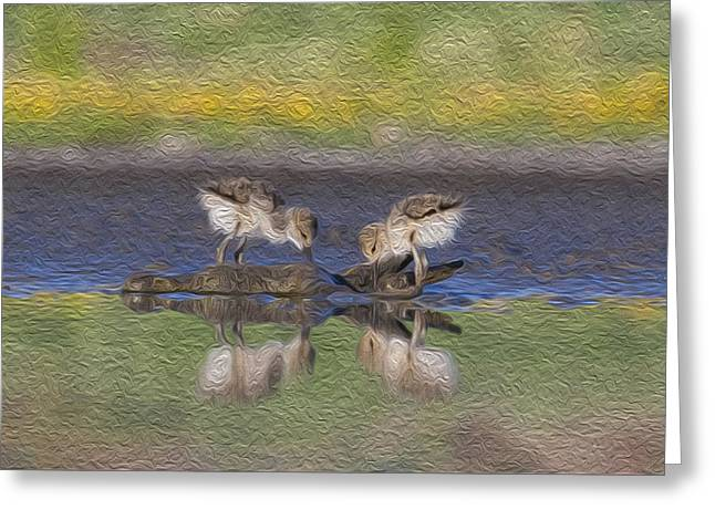 Avocet Babies Greeting Card