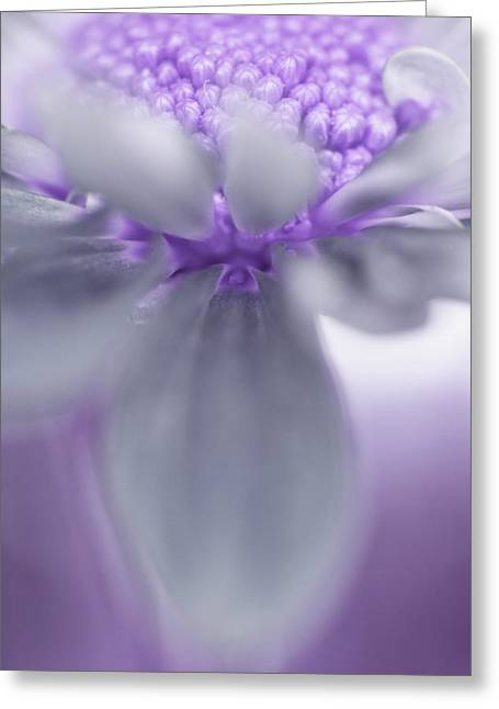 Awashed In Lavender Greeting Card