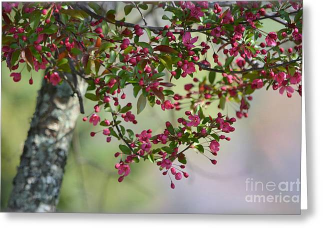 Greeting Card featuring the photograph Awe... Spring by Brenda Bostic