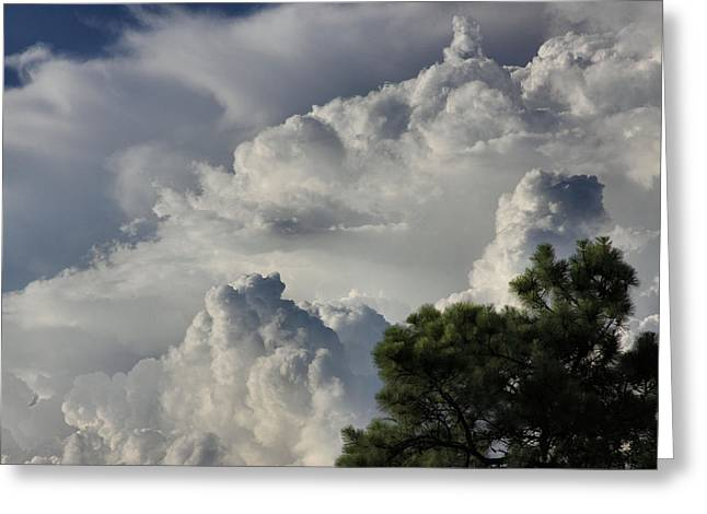 Awesome Cloulds And A Pine Tree Greeting Card by Maris Salmins