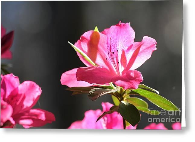 Azalea Blossom Greeting Card