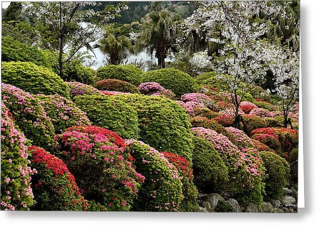 Azalea Bush Garden Greeting Card By Joe Bonita