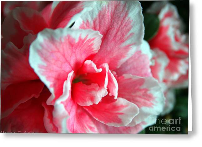 Azalea Close-up Greeting Card
