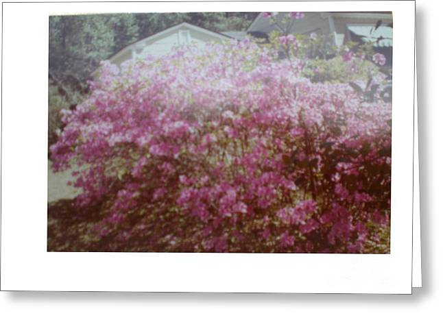 Azalea Framed By Roof Greeting Card by Hal Newhouser