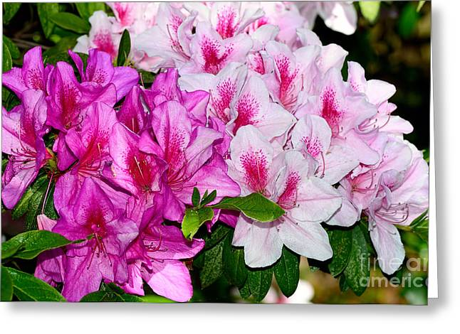 Azalea Garden By Kaye Menner Greeting Card by Kaye Menner
