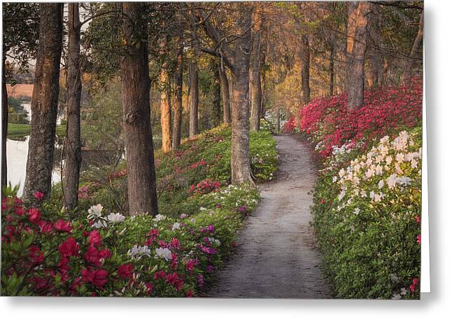 Azalea Hill Path Greeting Card
