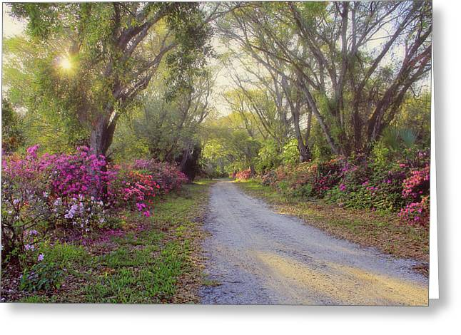 Azalea Lane By H H Photography Of Florida Greeting Card