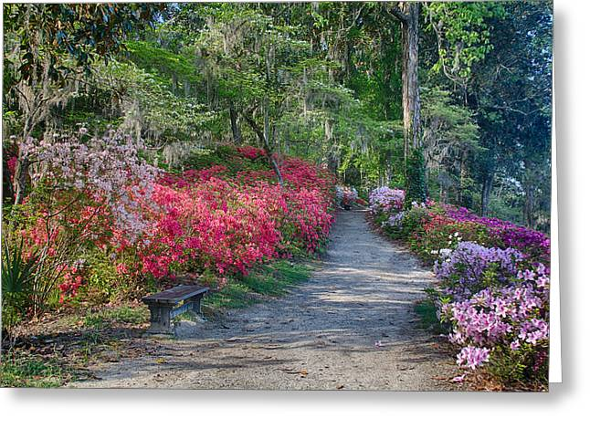 Azalea Path Greeting Card