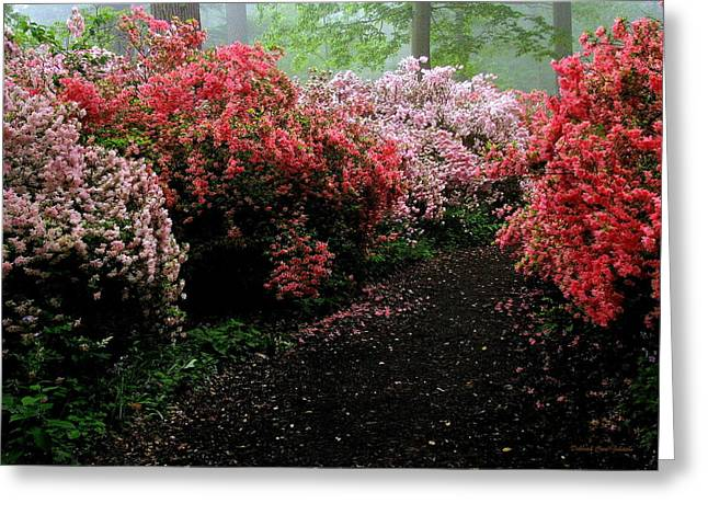 Azalea Pathway Greeting Card