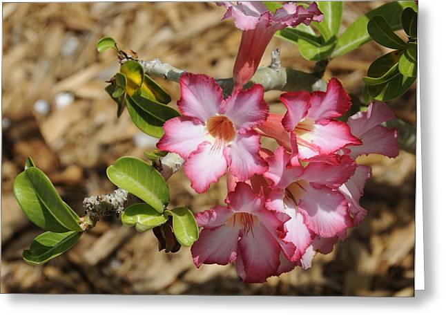 Azalea Pink I Greeting Card