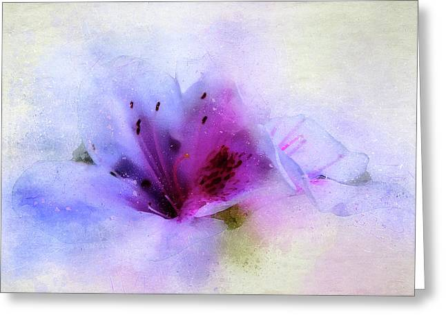 Azalea Splash 3 Greeting Card