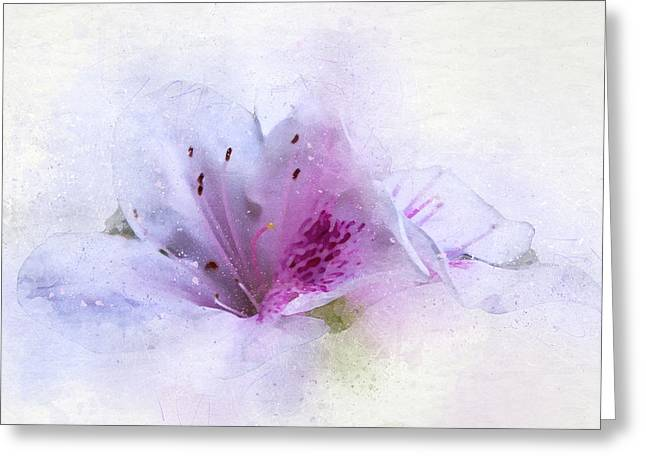 Azalea Splash Greeting Card