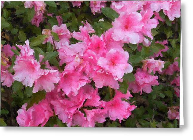 Pink Althea Greeting Cards - Azalea watercolor  Greeting Card by Fred Jinkins