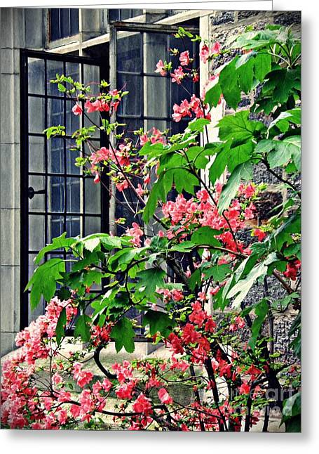 Azaleas At The Window   Greeting Card