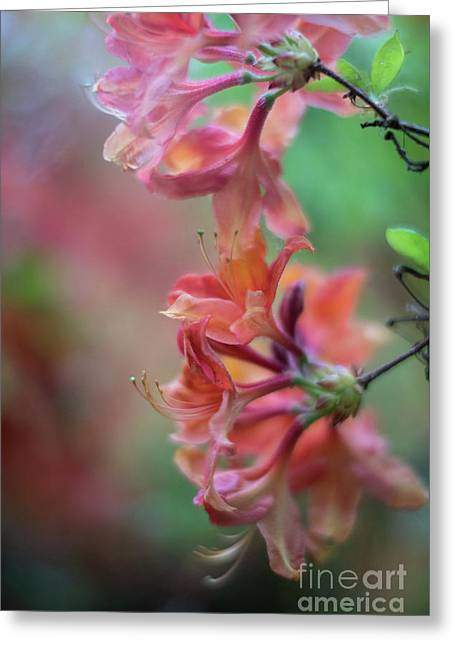 Azaleas Cluster Of Flowers Greeting Card