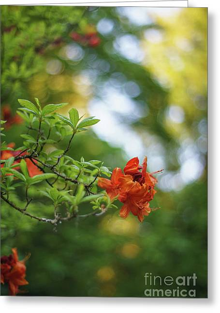 Azaleas Garden Of Eden Greeting Card