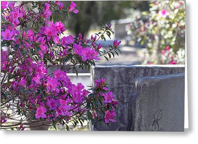 Azaleas In Bloom Greeting Card by Kim Hojnacki