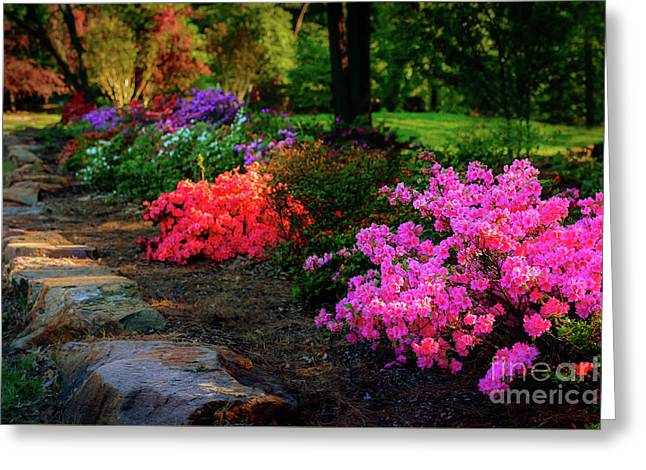 Azelea Row At The Azalea Festival Greeting Card by Tamyra Ayles
