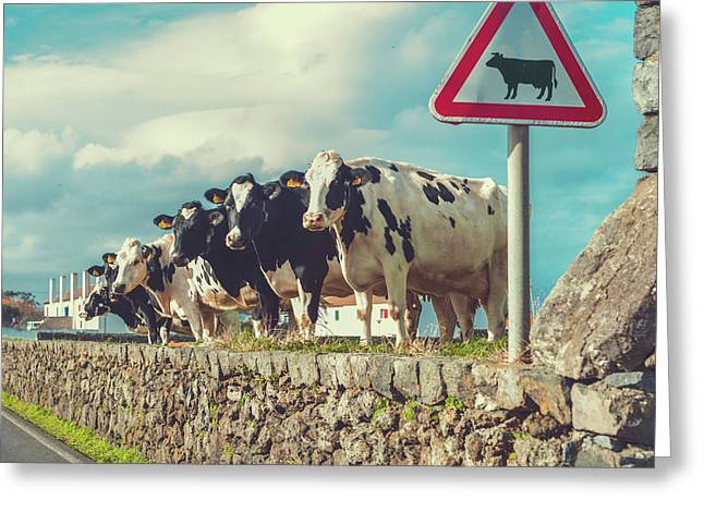 Azores Cow Crossing Greeting Card