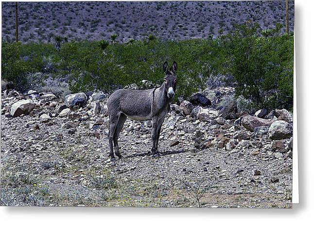 Azorina Donkey Greeting Card by Garry Gay