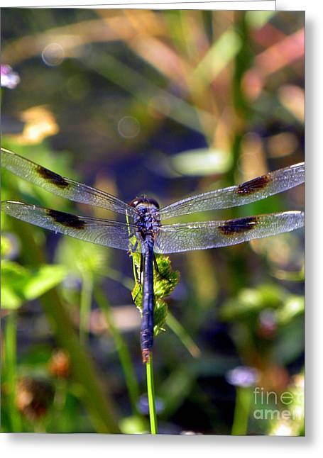 Azure Dragonfly Greeting Card