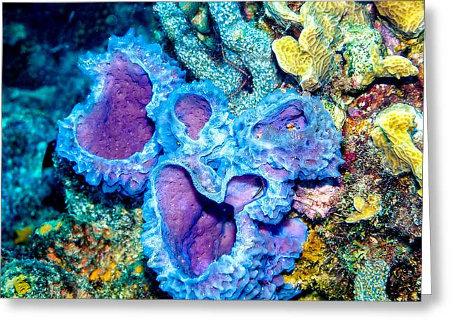 Greeting Card featuring the photograph Azure Vase Sponges by Perla Copernik