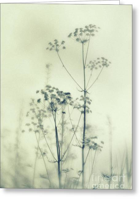 Wild Flowers 3 Greeting Card