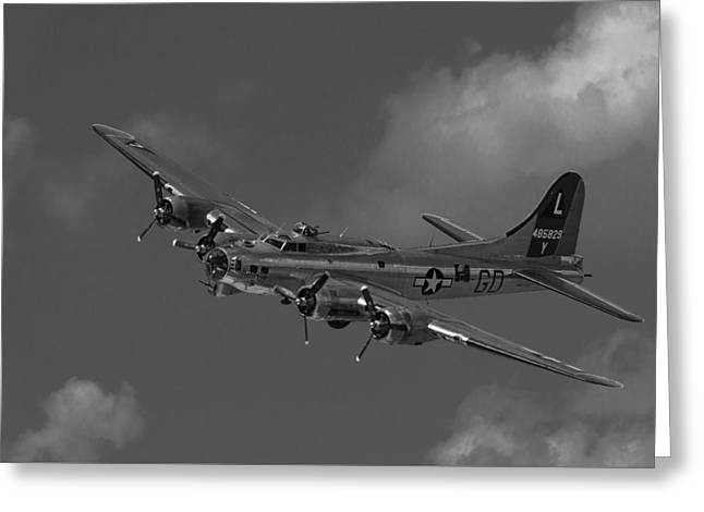 B29 Bomber Greeting Card by Margarida  Bernardo