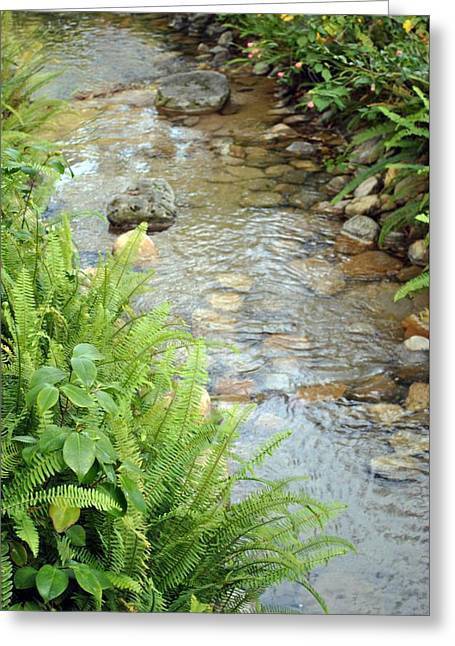 Greeting Card featuring the photograph Babble Brook by Amanda Eberly-Kudamik