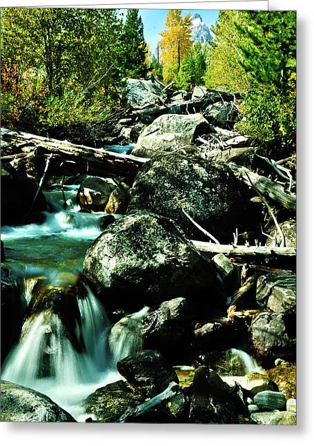 Babbling Brook Greeting Card by Greg Norrell
