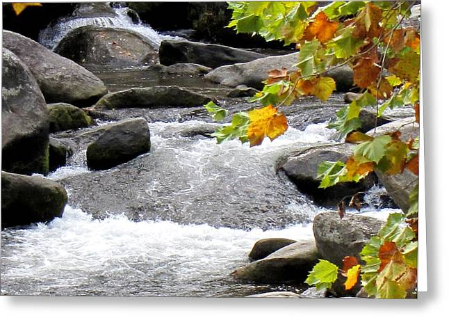 Babbling Brook Greeting Card by Pauline Ross