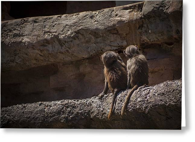 Baboon Brothers Greeting Card