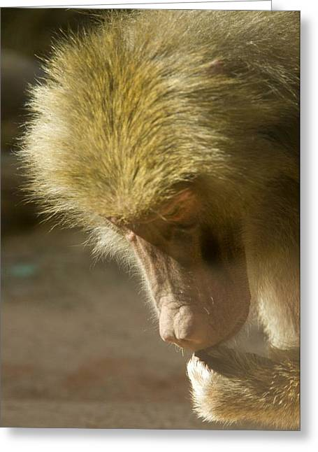 Baboon Craps Shooter Greeting Card by Richard Henne