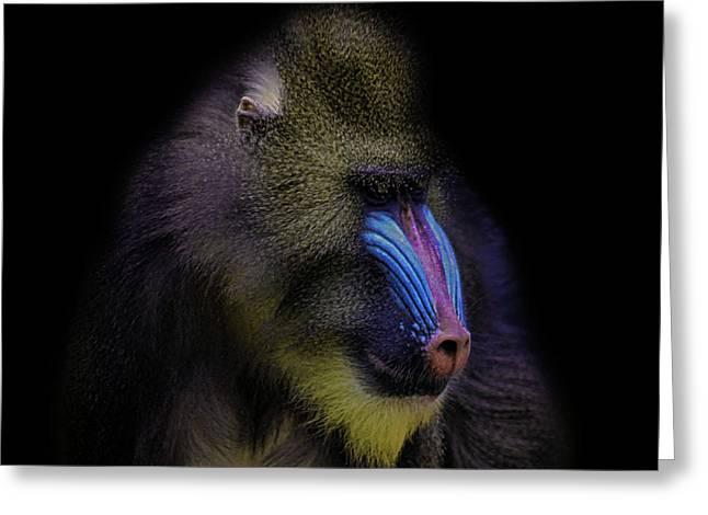 Baboon Portrait Greeting Card