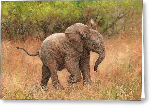 Baby African Elelphant Greeting Card by David Stribbling