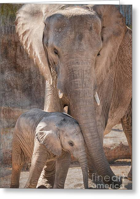 Baby African Elephant Wanting Affection Greeting Card by Al Andersen
