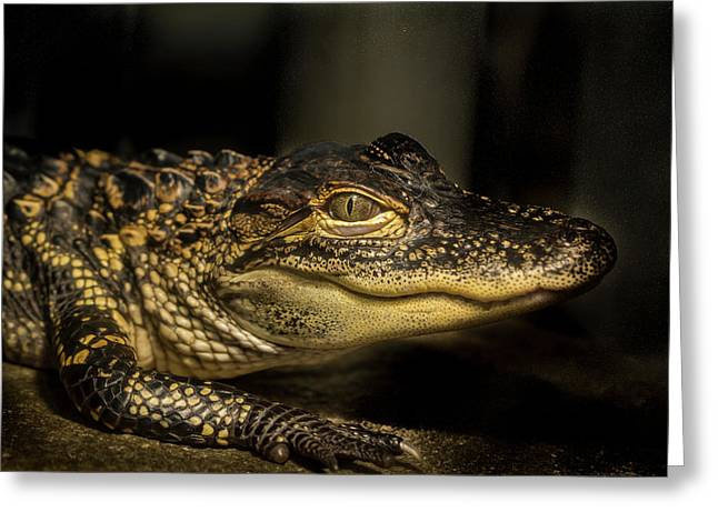 Baby Alligator Greeting Card by Jean Noren