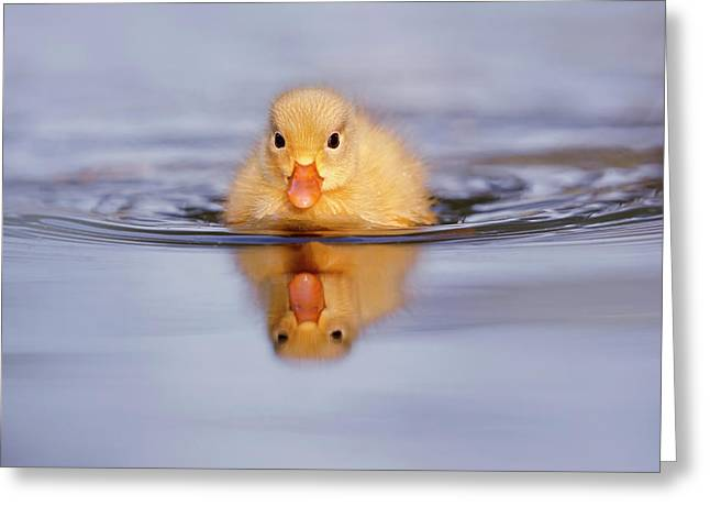 Baby Animals Series - Yellow Duckling Greeting Card
