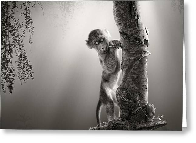 Baby Baboon Greeting Card by Johan Swanepoel