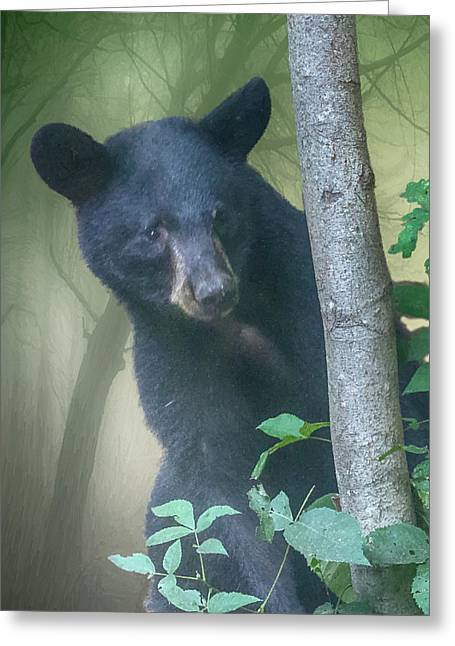 Baby Bear Takes A Peek Greeting Card